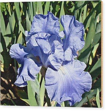 Iris Wood Print by Nick Kloepping