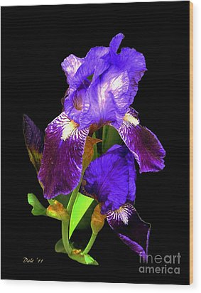 Iris On Black Wood Print