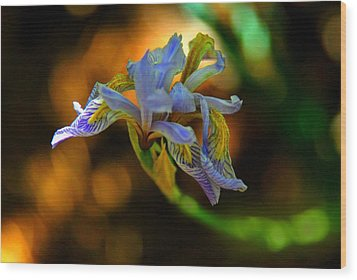 Wood Print featuring the photograph Iris by Tam Ryan