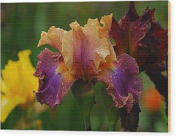 Irises In Indiana Wood Print
