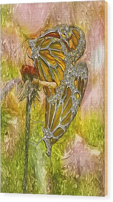 Iron Butterflys Wood Print by Jack Zulli