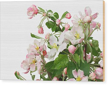 Wood Print featuring the photograph Isolated Pink Apple Flowers by Aleksandr Volkov