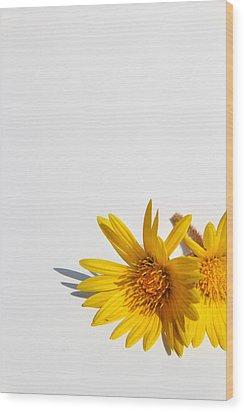 Isolated Yellow Chrysanthemum Flower Wood Print by Gal Ashkenazi