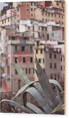 Italian Aloe Wood Print by Mike Reid