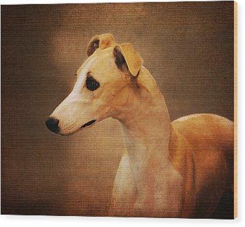 Italian Greyhound Wood Print by Jai Johnson
