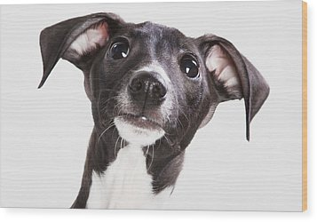 Italian Greyhound Puppy Spruce Grove Wood Print by Leah Bignell