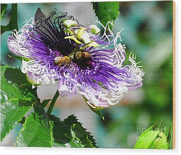 Wood Print featuring the photograph It's A Passion by Linda Mesibov