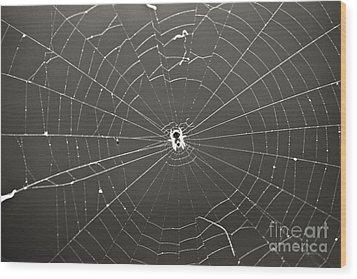 Itsy Bitsy Spider Wood Print by Leslie Leda