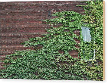 Ivy Covered Window Wood Print by Gary Slawsky