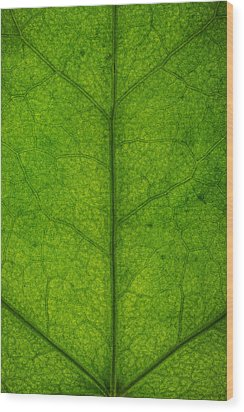 Ivy Leaf Wood Print by Steve Gadomski