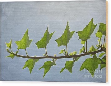 Ivy To The Left Wood Print