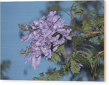 Jacaranda Mimosifolia Wood Print by Elizabeth  Doran