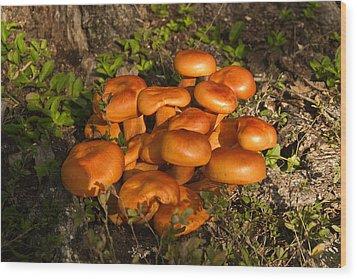Jack Olantern Mushroom 1 Wood Print by Douglas Barnett