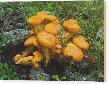 Jack Olantern Mushrooms 4 Wood Print by Douglas Barnett