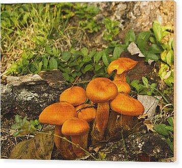 Jack Olantern Mushrooms 7 Wood Print by Douglas Barnett