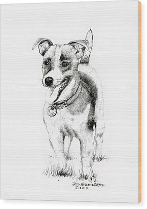 Wood Print featuring the drawing Jack Russell Terrier by Jim Hubbard