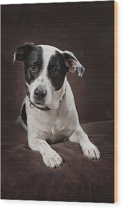 Jack Russell Terrier On A Brown Studio Wood Print by Corey Hochachka