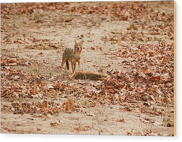 Wood Print featuring the photograph Jackal Standing Over Deer Kill by Fotosas Photography