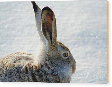 Jackrabbit Wood Print