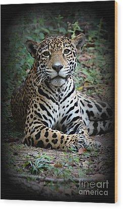 Wood Print featuring the photograph Jaguar Portrait by Kathy  White