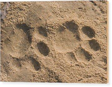 Jaguar Tracks Wood Print by Tony Camacho