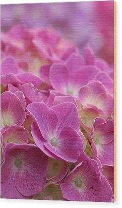 Japan, Kanagawa Prefecture, Sagamihara City, Close-up Of Pink Flowers Wood Print by Imagewerks