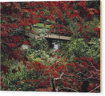 Japanese Garden, Through Acer In Wood Print by The Irish Image Collection