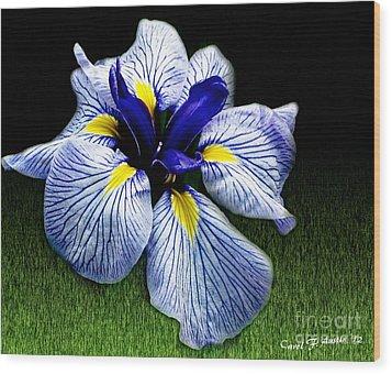 Japanese Iris Ensata - Botanical Wall Art Wood Print