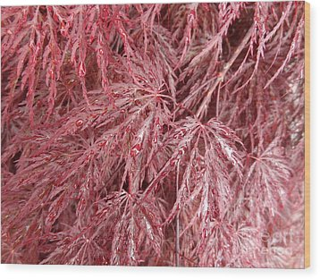 Wood Print featuring the photograph Japanese Maple by Laurel Best