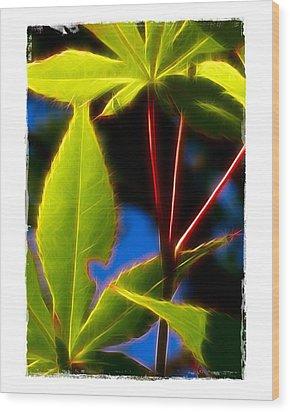 Japanese Maple Leaves Wood Print by Judi Bagwell