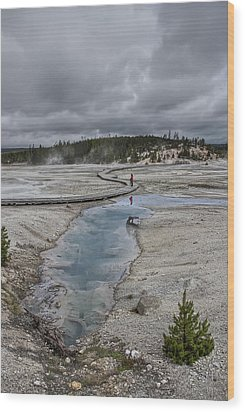Japanese Woman With Umbrella At Norris Geyser Basin Wood Print by Daniel Hagerman