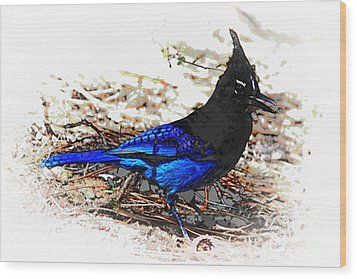 Jay On Pine Needles Wood Print by Val Armstrong