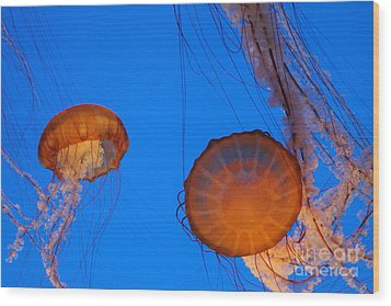 Jellies Wood Print by Tap On Photo