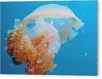 Jellyfish And Small Fish Wood Print by Takau99