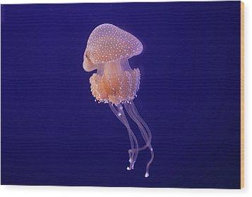 Jellyfish Wood Print by Pandiyan V