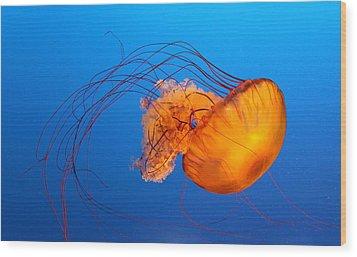 Jellyfish Wood Print by Viviana Singh