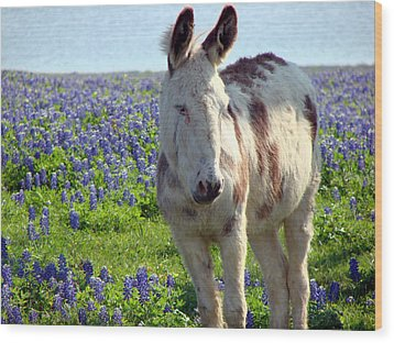 Wood Print featuring the photograph Jesus Donkey In Bluebonnets by Linda Cox