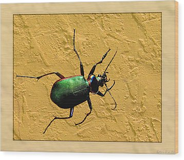 Wood Print featuring the photograph Jeweltone Beetle by Debbie Portwood
