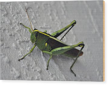 Jimeny Cricket Wood Print by Kelli Reed