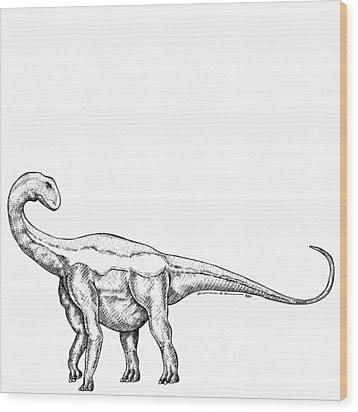 Jobaria - Dinosaur Wood Print by Karl Addison