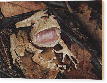 Johnsons Horned Treefrog Hemiphractus Wood Print by Michael & Patricia Fogden
