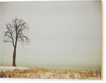 Jordan, Ontario, Canada A Tree Along Wood Print by Pete Stec