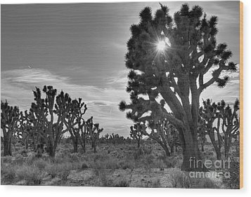 Joshua Tree National Preserve Wood Print by Eddie Yerkish