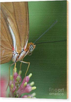 Julia Butterfly Wood Print by Pamela Gail Torres