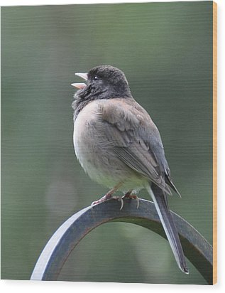 Wood Print featuring the photograph Junco Sings by Ronda Broatch
