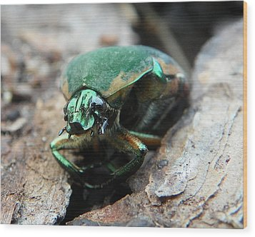 Wood Print featuring the photograph June Bug Shine by Chad and Stacey Hall
