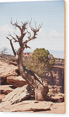 Juniper - Colorado National Monument Wood Print by Bob and Nancy Kendrick