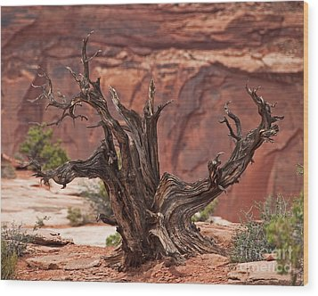 Juniper At Canyonlands Wood Print
