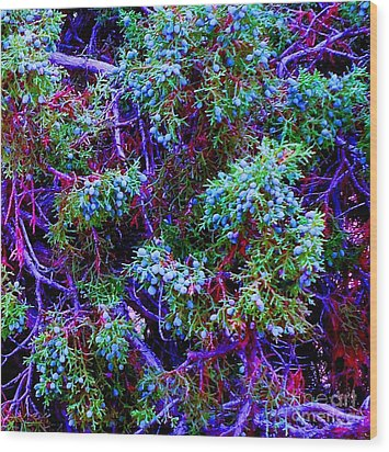 Wood Print featuring the photograph Juniper Neurons by Ann Johndro-Collins