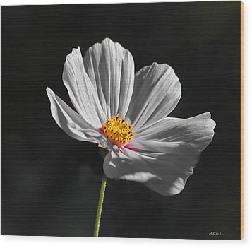 Just A Flower Wood Print by Mitch Shindelbower